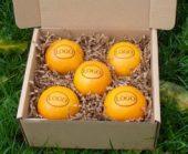 logo-orangen